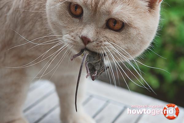 Кошка в доме – мыши вон