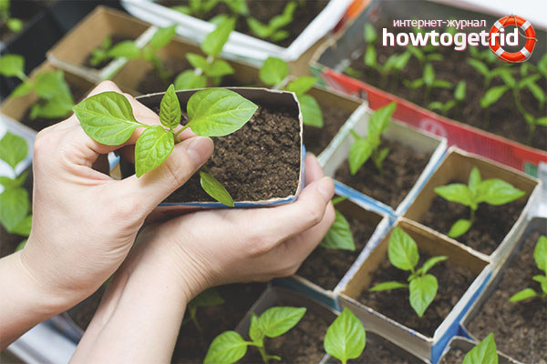 Емкости для выращивания рассады перца
