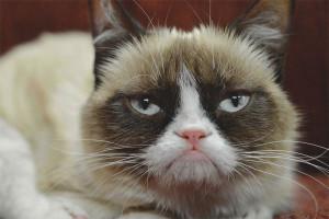 Как кошке померить температуру