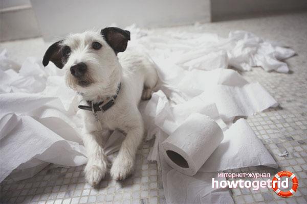 Как приучить собаку ходить в туалет на улице