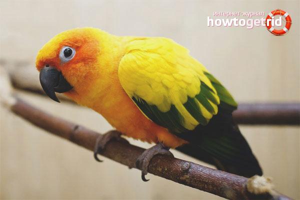 Как согреть попугая если дома холодно