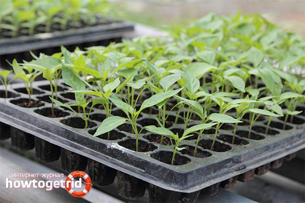 Первые достижения выращивания рассады в таблетках