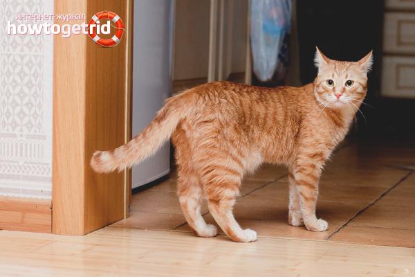 Как отучить кошку гадить по всей квартире