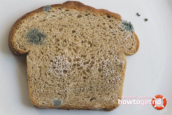 Как вырастить плесень на хлебе