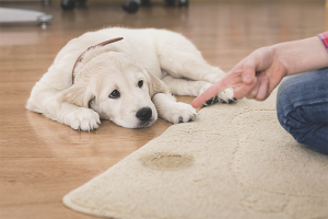 Как избавиться от запаха собачьей мочи