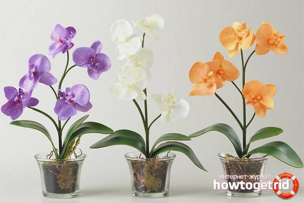 Выбор горшка и грунта для орхидеи