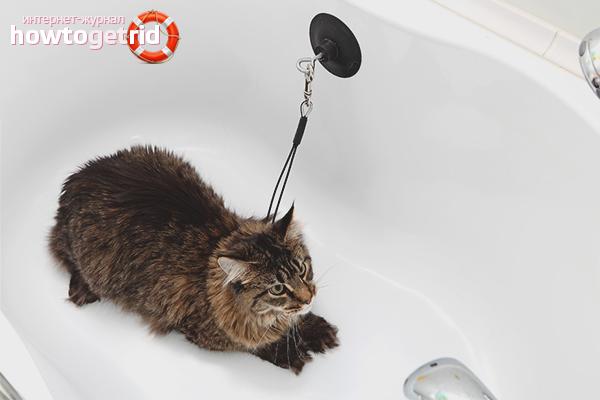 Подготовка перед купанием кошки