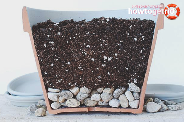Почва для герберы