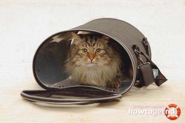 Рекомендации как перевезти кошку