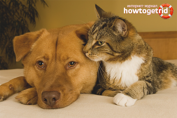Рекомендации как подружить собаку с кошкой