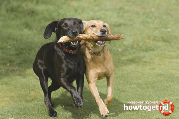 Учим собаку приносить палку