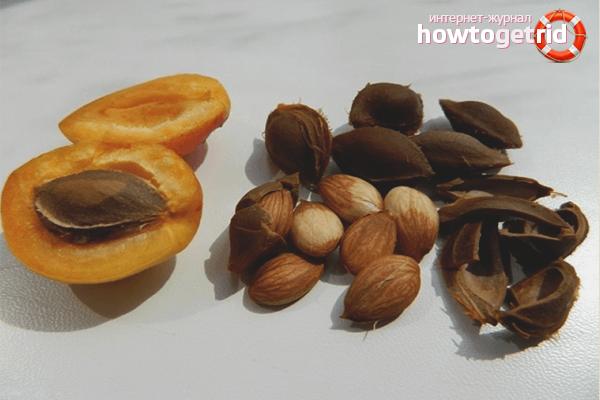 Закаливание абрикосовых косточек