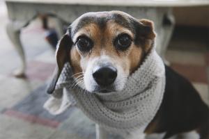 Как лечить сопли у собаки