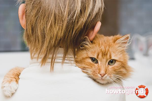 Успокаиваем кошку во время течки