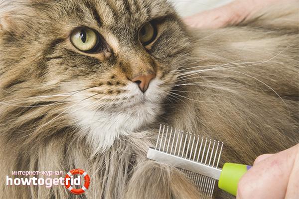 Как избавиться от колтунов у кошки