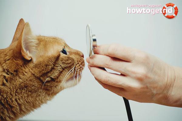Как лечить насморк у кошки
