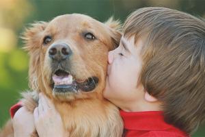 Как уговорить родителей купить собаку