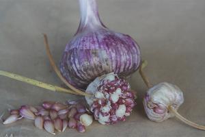 Как вырастить чеснок из бульбочек