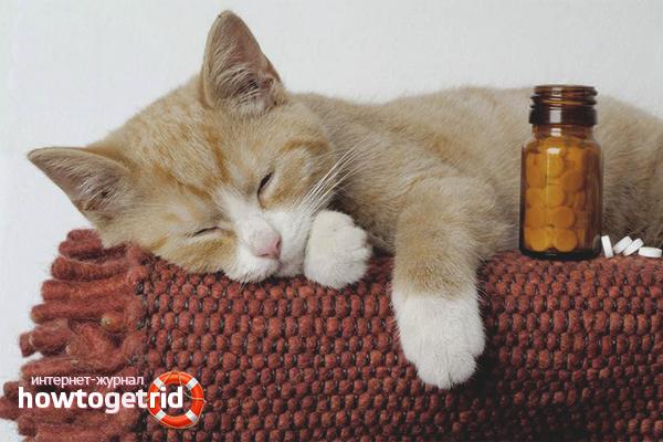 Как правильно дать коту таблетку