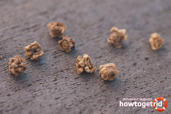 Как обрабатывать семена свеклы