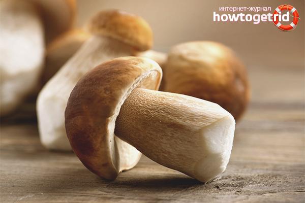 Как заморозить белые грибы на зиму