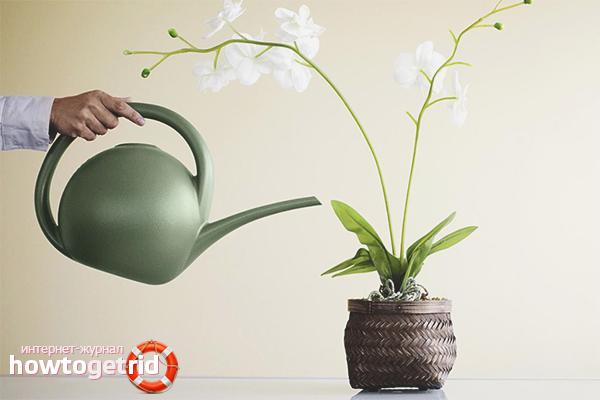 Правильный полив для цветения орхидеи