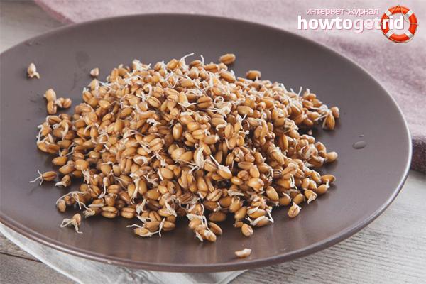 Что приготовить из пшеницы