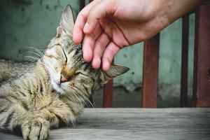 Как сделать кошку ласковой
