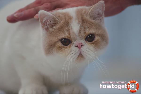 Как воспитать кошку ласковой