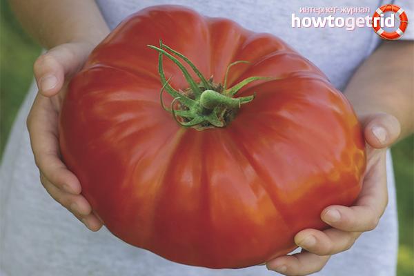 Как вырастить большие помидоры