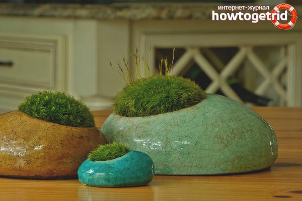 Как вырастить мох