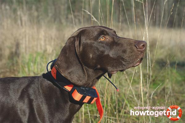 Навигационный ошейник для собак