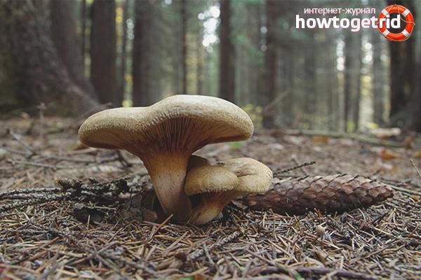 Как проверить грибы на ядовитость