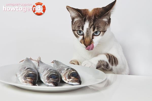Кормление кастрированного кота натуральной пищей
