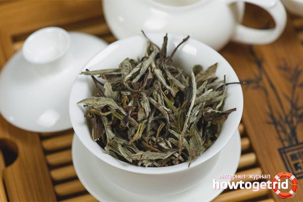 Противопоказания к приёму белого чая