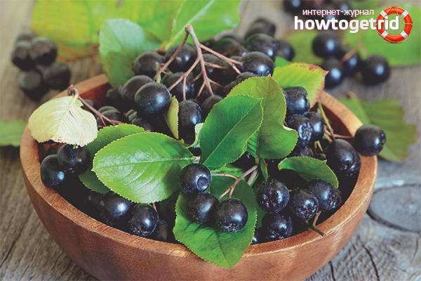 Польза и вред черноплодной рябины