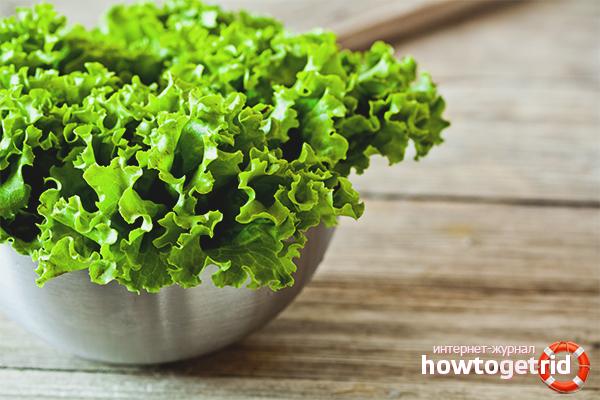 Польза и вред листового салата