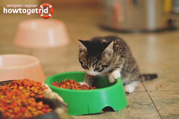 Чем кормить взрослого котенка