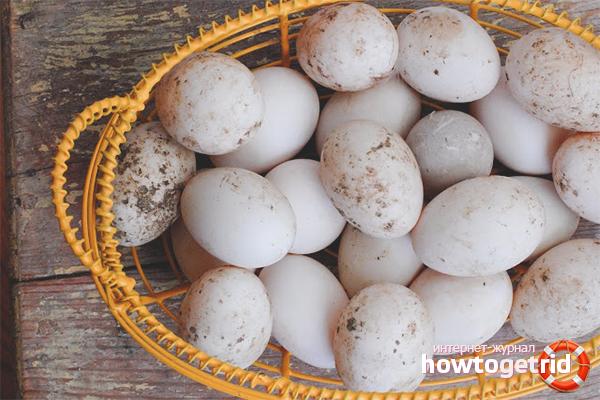 Яйца уток для диабетиков
