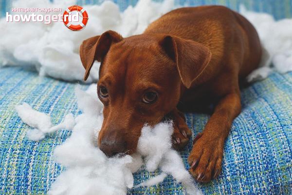 Как отучить собаку грызть все подряд