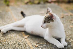 Как понять, что кошка беременна