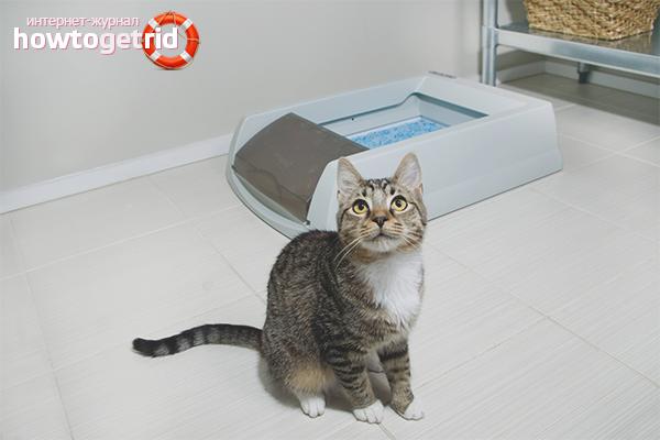 Лечение запора у кота дома