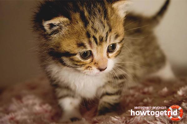 Психологическое состояние котенка