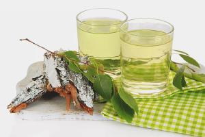 Польза и вред березового сока