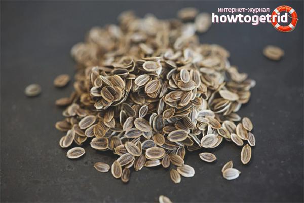 Положительное влияние семян укропа на организм