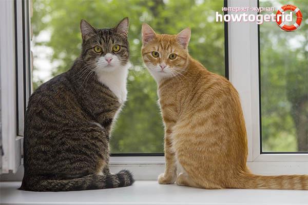 Как подружить двух кошек в одной квартире