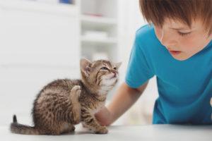 Как вывести блох у котенка