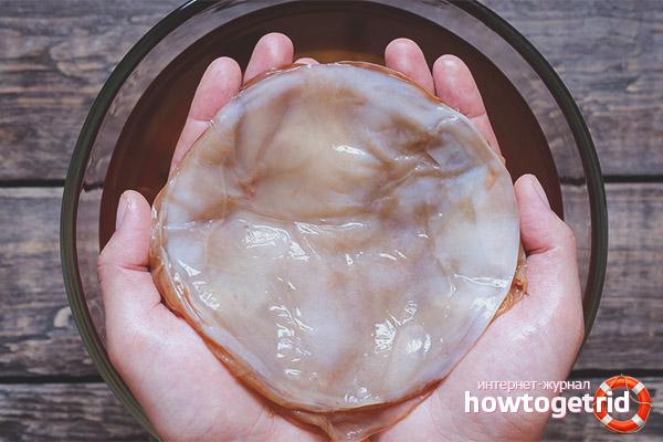Полезные свойства и противопоказания чайного гриба