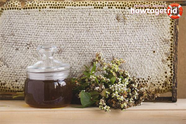 Полезные свойства и противопоказания гречишного меда