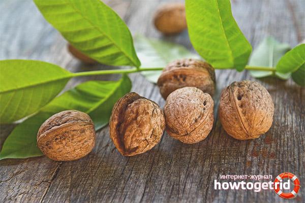 Полезные свойства и противопоказания листьев грецкого ореха